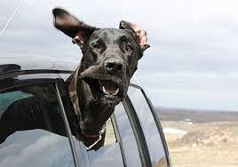 Vacanze a quattro zampe, il decalogo Ceva Salute Animale per un 'buon viaggio' a misura di cane