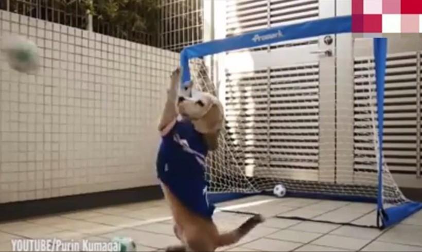Purin, il beagle portiere da guinness, nell'albo 2016 dei record