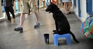 L'accattonaggio coi cani diventi reato: proposta di legge ferma dal 2008. Ma fare qualcosa si può