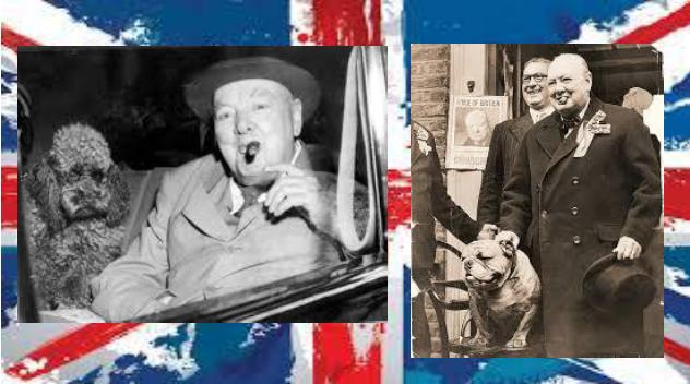 Bassi, riccioluti, tarchiati: con Churchill tanti ospiti a quattro zampe in Downing Street