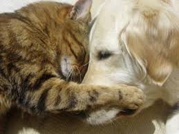 Cane salva mamma gatta e i suoi piccoli. Erano stati abbandonati in una scatola