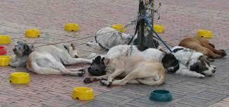 Roma, la polizia sequestra tre cani maltrattati. E scattano le denunce