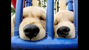 Detenuti col diploma da cani: così a Bollate ricerca e recupero vanno a braccetto