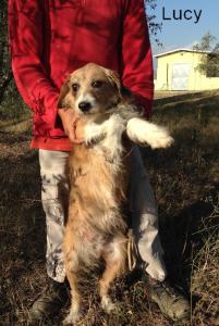 Lucy è tra gli ospiti del canile di Cinigiano