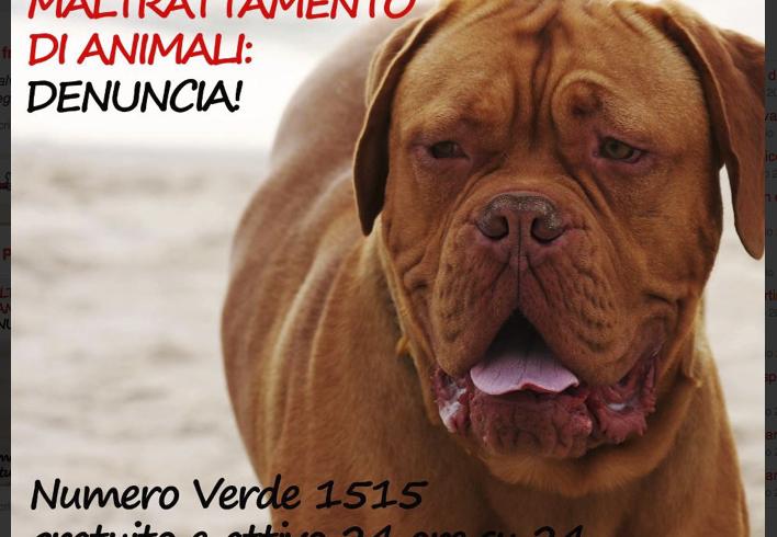 Toscana drammatica: due cani straziati dai proprietari nel giro di poche ore