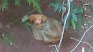 La prima foto del cucciolo dopo il salvataggio