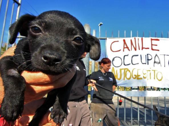 """Canili di Roma ancora al centro della protesta. Stamani sit-in dei lavoratori. Feder FIDA: """"Finanziamenti comunali direttamente nelle ciotole dei cani. Le Associazioni facciano volontariato"""""""