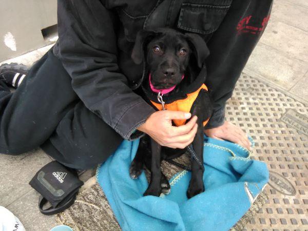 Tre cuccioli stremati sfruttati per l'accattonaggio: a Venezia scatta il sequestro