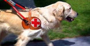 Piccoli cani guida crescono, ma serve l'adozione temporanea. Sabato open day alla Scuola nazionale