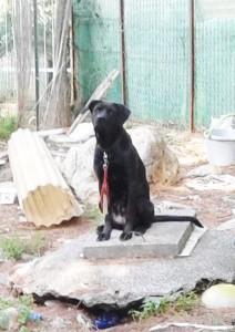 Il cane protagonista della vicenda