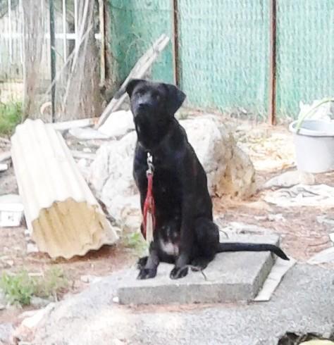 Cane per mesi solo con poco cibo e acqua, aiutato dai vicini. Proprietario denunciato a Loano