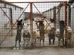 Adotta un cane dal canile! Il Comune di Tortora ti dà una mano con 400 euro