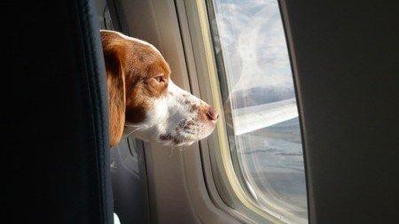 Ammettere i cani in cabina dell'aereo con i loro padroni: QualaZampa firma la petizione