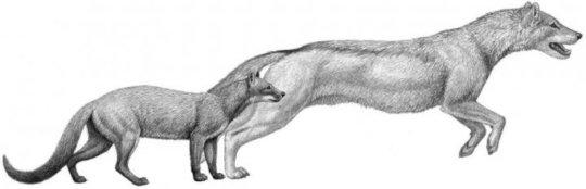 Gli antenati di Fido erano bassi: colpa del clima. Nuovo studio sull'evoluzione