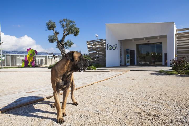 Foof! A Mondragone c'è il primo museo del cane