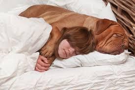 Per il cane siamo un porto sicuro: lo dimostra una ricerca della Lincoln University