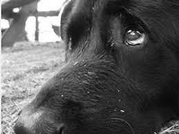 Legato, denutrito, senza cuccia né acqua: il cane ora è in salvo al canile di Udine