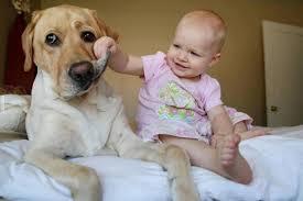 """In classe a lezione di animali: arriva """"Cuccioli Amori"""""""