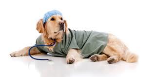 Il tumore della prostata? I cani lo scoprono a lume di naso il 97% delle volte