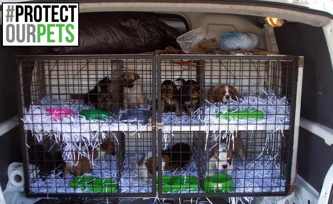 """Contro il traffico di cuccioli in Europa """"Protect our Pets"""". Qualazampa aderisce alla campagna"""