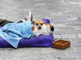 Si offre come dog sitter, poi usa il cane per chiedere l'elemosina