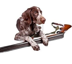Francia, battuta di caccia si chiude col cane che spara al cacciatore