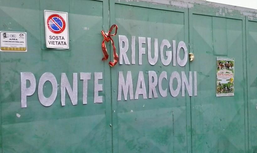 Roma, all'ex Cinodromo cani abbandonati a se stessi. Allarme Avcpp