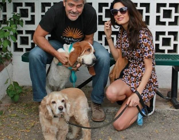 Randagina basset adottata al canile da Clooney e Amal