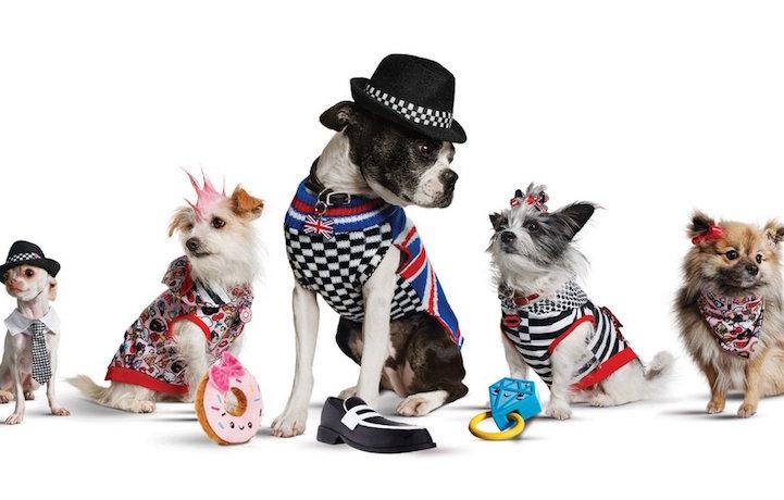 Fido veste Stefani. Nuova linea pet-fashion della cantante statunitense