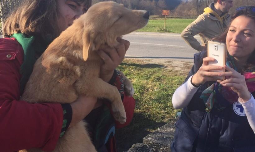 Missione Enpa rientra dalla Bosnia: entro fine anno nuovo rifugio per i cani randagi