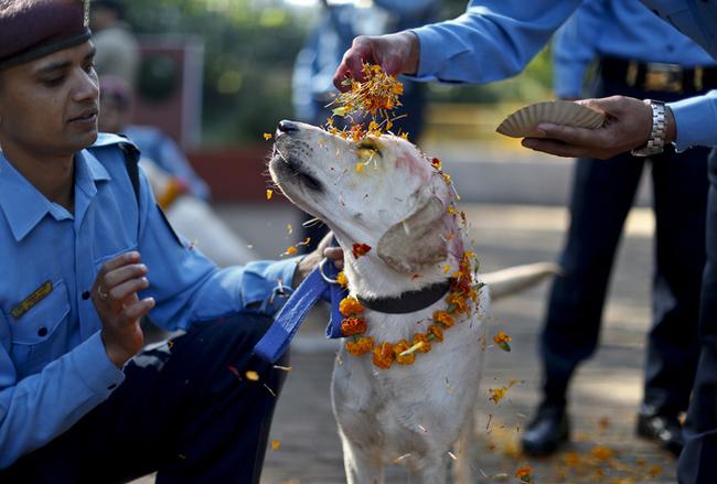 In Nepal il festival che onora e ringrazia il cane