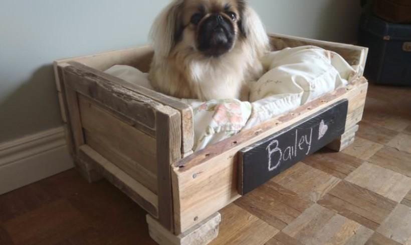 Case italiane sempre più pet-friendly. I dati nell'indagine Houzz