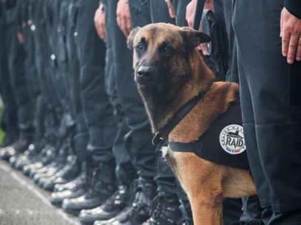 Diesel, medaglia postuma per il cane morto a Parigi
