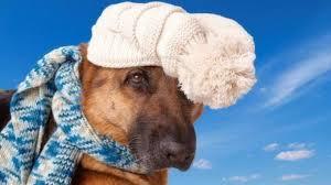 cane inverno buffo