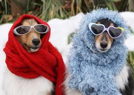 cane inverno neve freddo