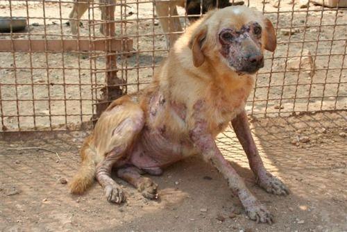 Centinaia di cani lasciati a morire di fame: a Bari 56enne a giudizio. Enpa parte civile