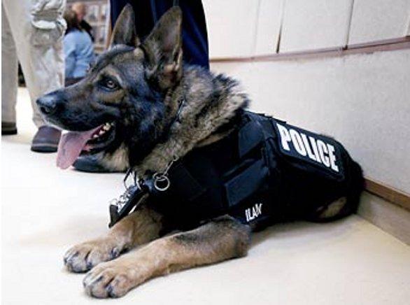 """Adieu Diesel, Aidaa scrive al governo: """"Giubbotti protettivi anche per i cani poliziotto"""""""