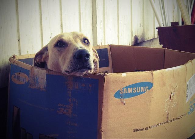 Perchè il mio cane non va nella sua cuccia?