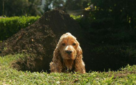 Perché i cani scavano le buche?