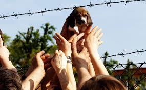 Green Hill, condannati 12 animalisti. La Lav protesta