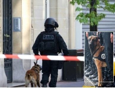 Adieu Diesel, a Vagli di Sotto una statua per il cane poliziotto caduto a Saint-Denis