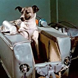 Laika, Balto e gli altri eroi a quattro zampe per le aree cani di Firenze
