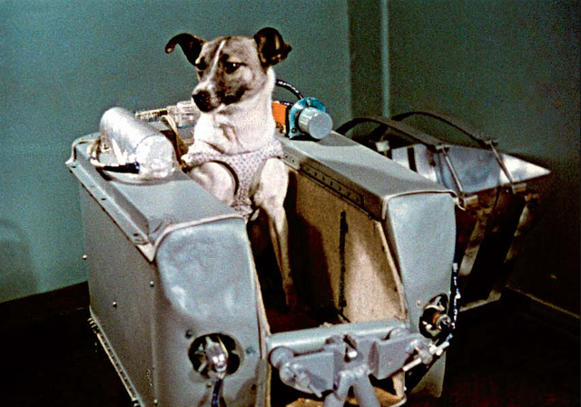 Oggi, nel 1957, la cagnolina Laika moriva sullo Sputnik
