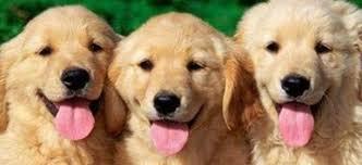 A Siniscola massimo tre cani per abitazione: sommerso dai fischi, il sindaco ritira l'ordinanza