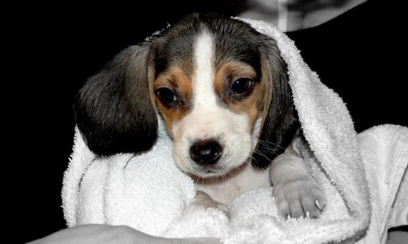 A scuola fin da cuccioli: arrivano le Puppy Class di Lie to Dog con Martina Donà