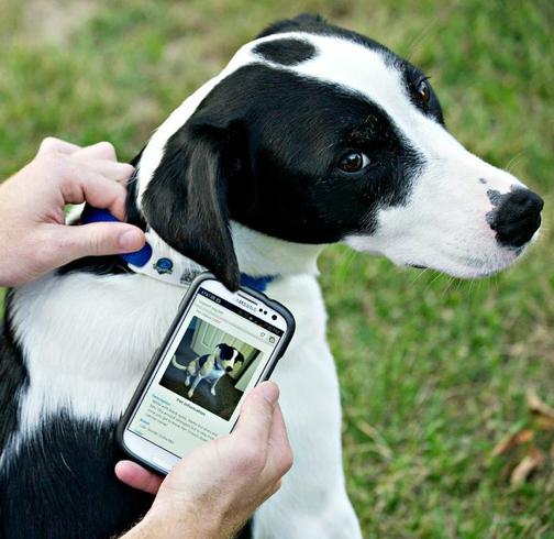 Arriva la medaglietta 2.0: tutti i dati di Fido si leggono via smartphone