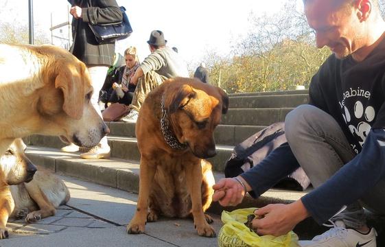 A Nantes un'associazione per cani 'senza tetto'
