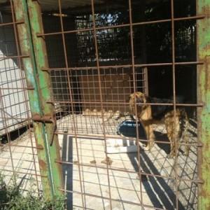 Cane salvato da un box fatiscente, denunciato il proprietario