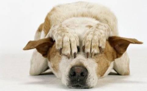 Perché i cani mettono la coda tra le zampe?