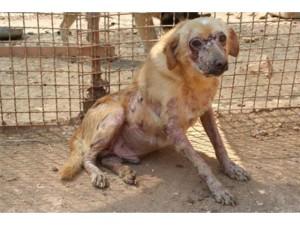 Al Dog's Hostel, prima del sequestro, i cani erano in queste condizioni